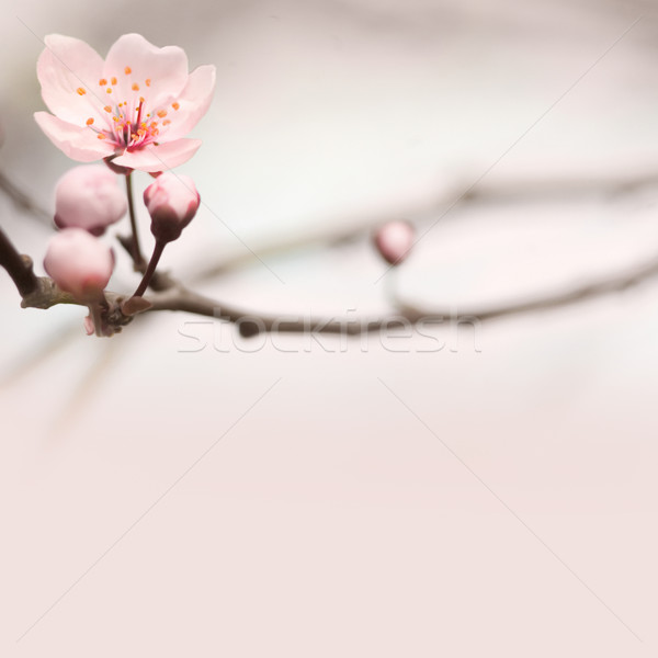 Spring header with copy space. Stock photo © lithian