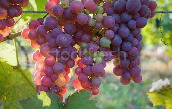 Fall harvest time. Stock photo © lithian