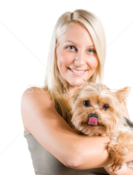 Hungry little dog. Stock photo © lithian