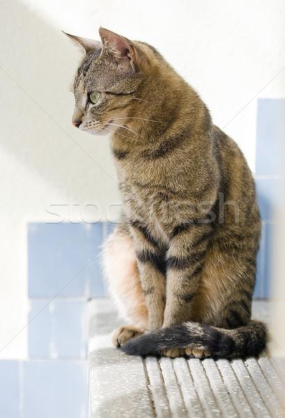 Cute young tabby cat relaxing. Stock photo © lithian