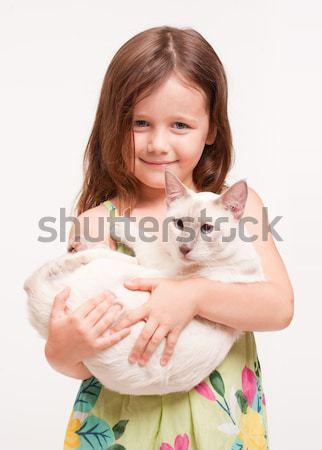 красивой кошки портрет сиамские кошки Сток-фото © lithian