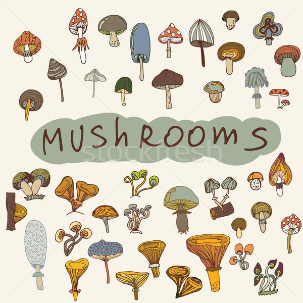 Conjunto cogumelos ilustração cogumelo comida mão Foto stock © LittleCuckoo