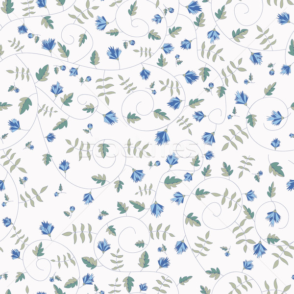 Cornflower pattern. Vector seamless texture Stock photo © LittleCuckoo