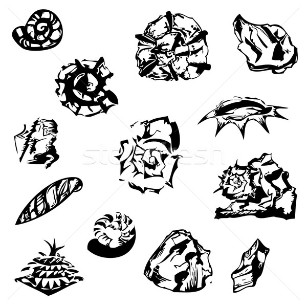 graphical shells, stones and a fir cone Stock photo © LittleCuckoo