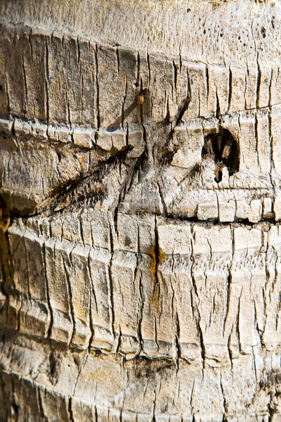 bark in kho  isle white   tree    thailand    Stock photo © lkpro