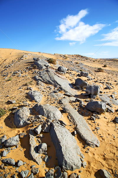 Bush oude fossiel steen hemel woestijn Stockfoto © lkpro