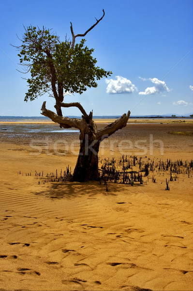 Grond boom reserve kust Madagascar blad Stockfoto © lkpro