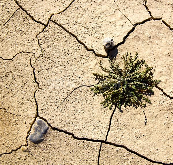 Kahverengi kuru kum sahara çöl Fas Stok fotoğraf © lkpro