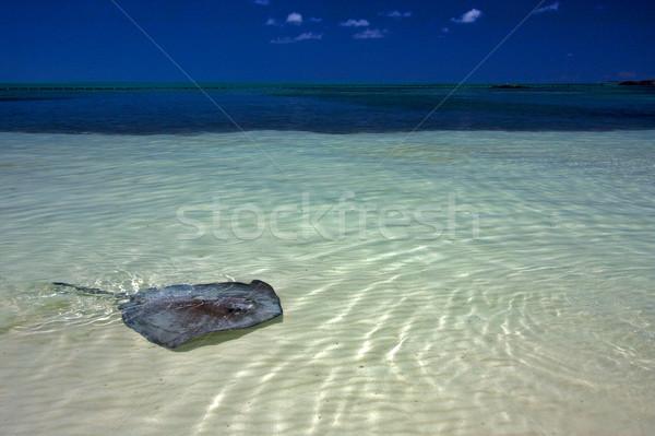 青 メキシコ ビーチ 空 水 食品 ストックフォト © lkpro