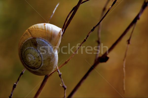 Bush kant wild bruin slak tak Stockfoto © lkpro