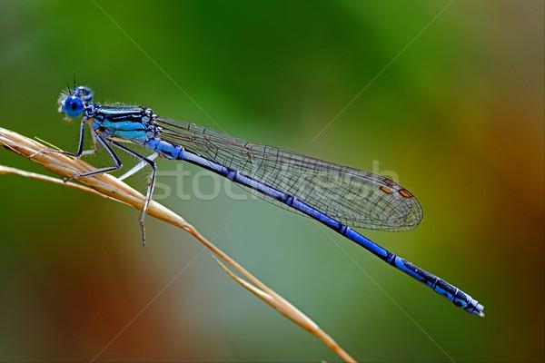 Mavi küçük göz ahşap yeşil renk Stok fotoğraf © lkpro