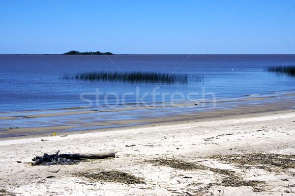 beach and wood uruguay  Stock photo © lkpro