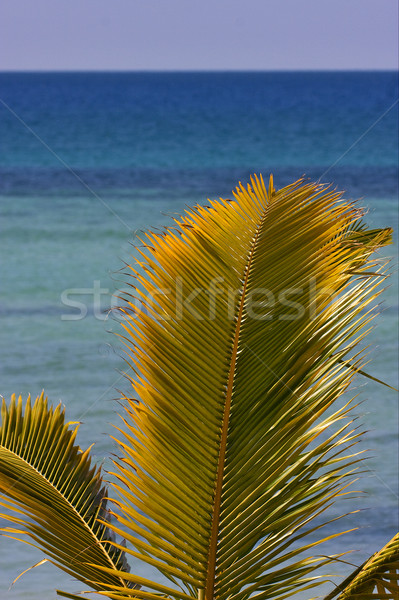 palm and sea Stock photo © lkpro