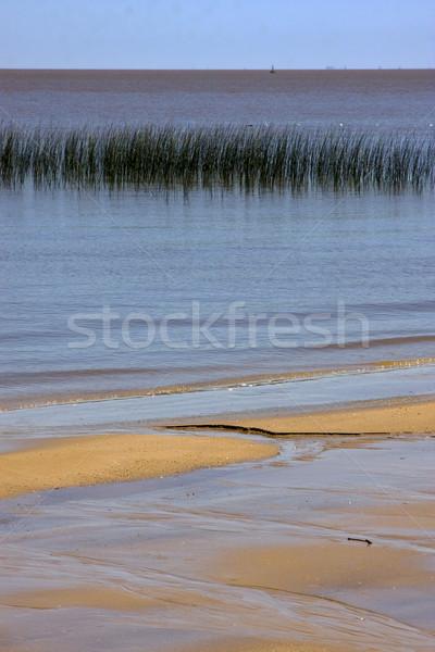 Rio Uruguay plaj çim gökyüzü Stok fotoğraf © lkpro