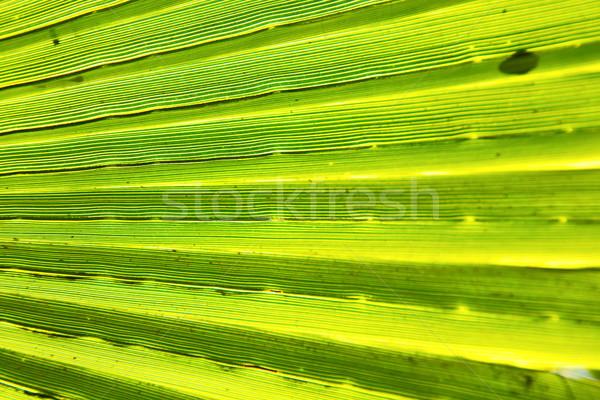 аннотация зеленый лист Blur свет тень Марокко Сток-фото © lkpro