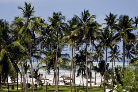 palm and coastline in  zanzibar Stock photo © lkpro