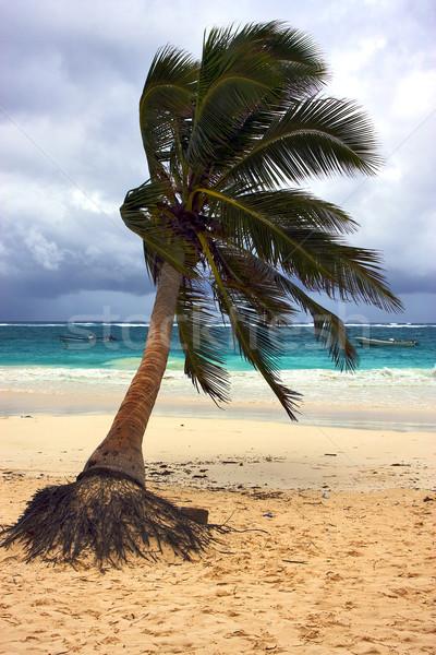 Zeewier kustlijn Mexico strand water boom Stockfoto © lkpro