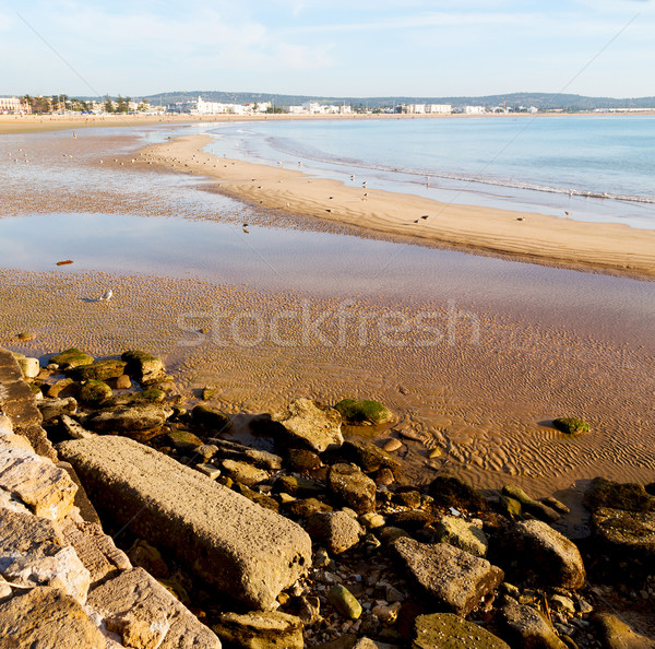 Absztrakt Marokkó tenger Afrika óceán hullám madár Stock fotó © lkpro