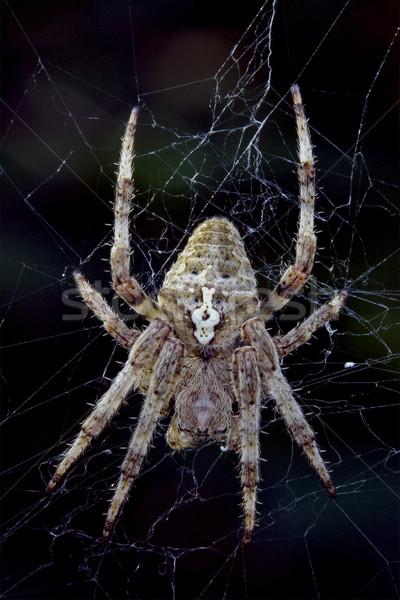 Pók közelkép háló zöld fekete barna Stock fotó © lkpro