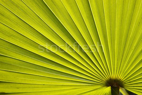 зеленый текстуры Багамские острова Palm свет Сток-фото © lkpro