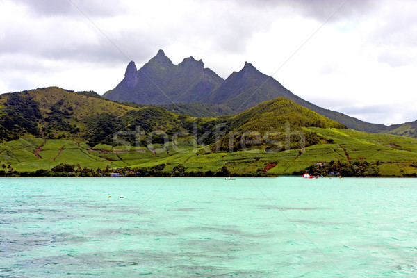 beach ile du cerfs seaweed in indian mountain Stock photo © lkpro