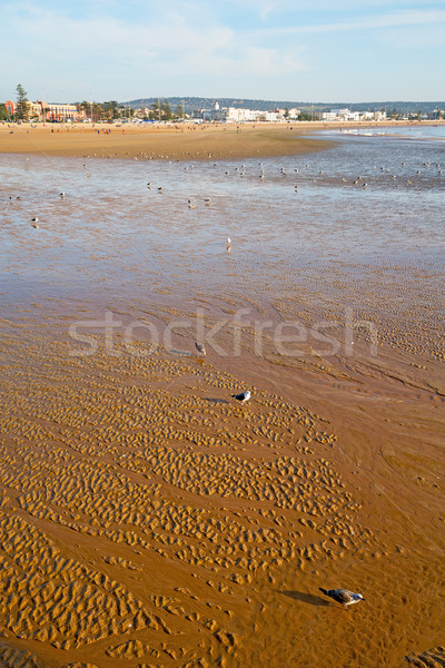 abstract in morocco  sea africa  and  bird Stock photo © lkpro