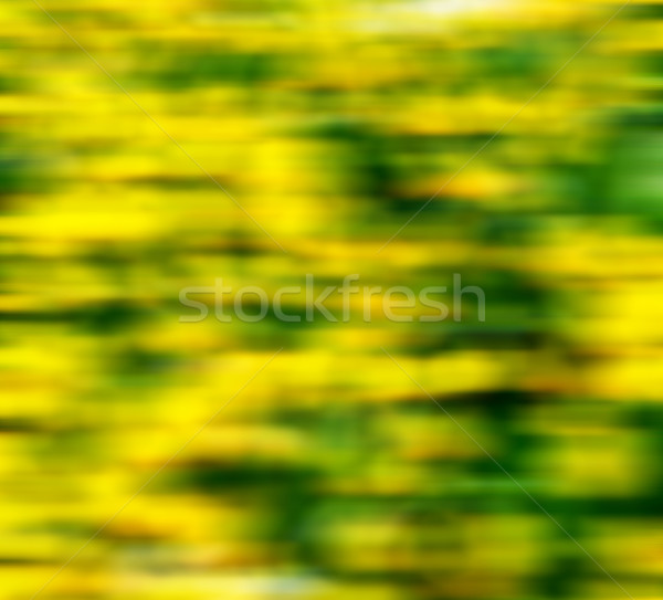 in london yellow flower field nature and spring Stock photo © lkpro