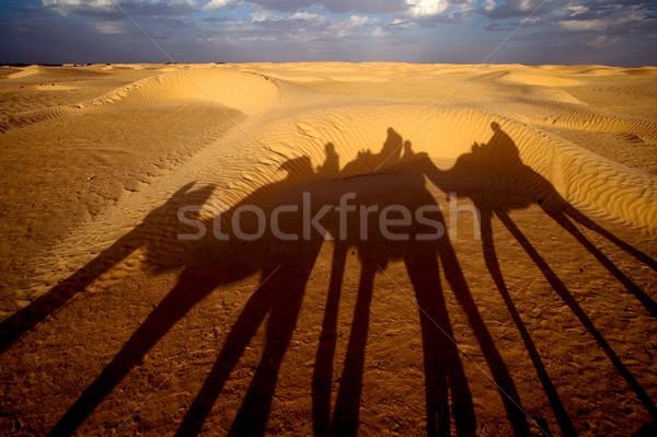 人 砂漠 緑 黒 雲 白 ストックフォト © lkpro