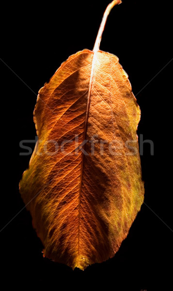autumn and the leaf Stock photo © lkpro