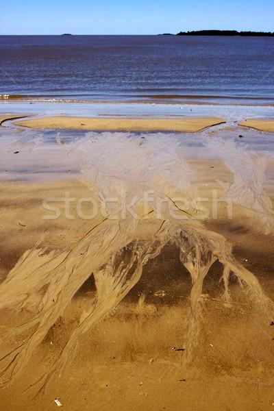 Сток-фото: пляж · Рио · воды · трава