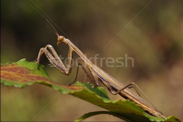 Groen blad oog tuin groene Rood Stockfoto © lkpro