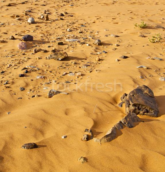 Eski fosil çöl Fas sahara kaya Stok fotoğraf © lkpro