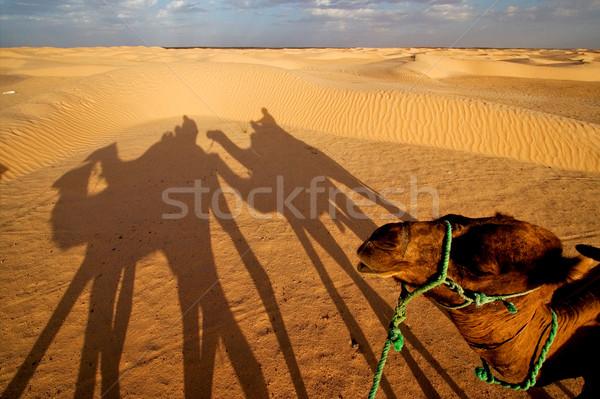 Zonsopgang woestijn mensen groene zwarte wolk Stockfoto © lkpro