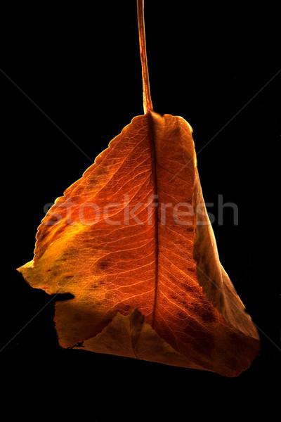 Najaar natuur licht blad Rood zwarte Stockfoto © lkpro