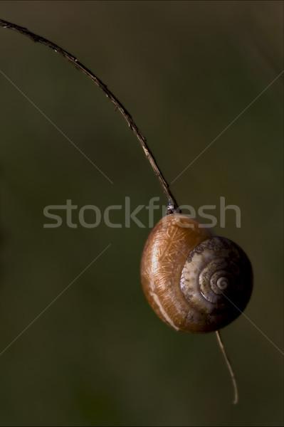 Arbusto lado marrom caracol ramo Foto stock © lkpro