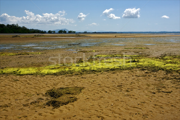 cloudy seaweed in madagascar  Stock photo © lkpro