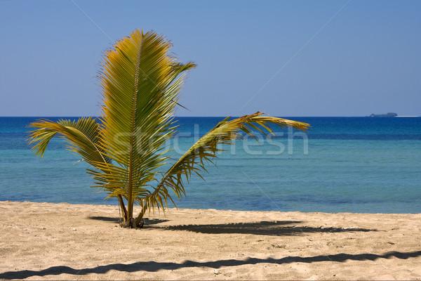 海岸線 マダガスカル 手のひら 空 水 ストックフォト © lkpro