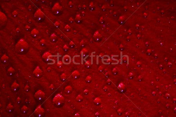 赤 テクスチャ 花 バラ 値下がり ストックフォト © lkpro