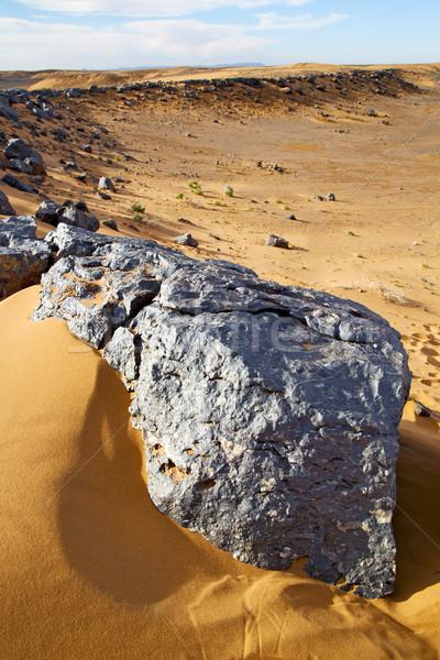 Foto stock: Bush · edad · desierto · Marruecos · sáhara · rock