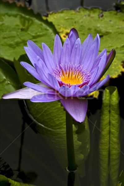 çiçekli çiçek orman yeşil Stok fotoğraf © lkpro