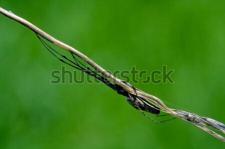 Stock photo: Arachnophobia and wood