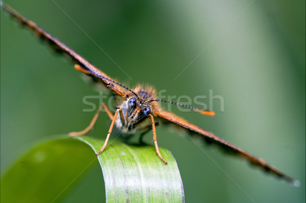 Bruin oog natuur blad Stockfoto © lkpro
