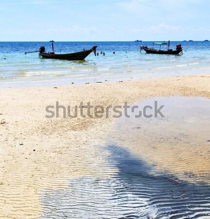 Inekler Tanzanya deniz yosunu plaj gökyüzü deniz Stok fotoğraf © lkpro