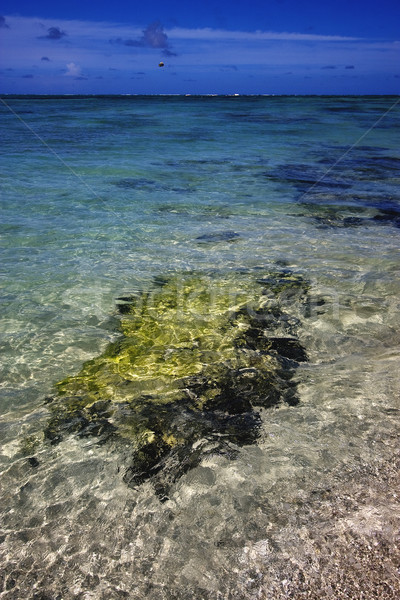 beach and seaweed in ile du cerfs mauritius Stock photo © lkpro