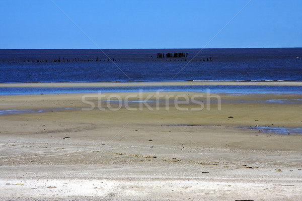 beach and wood in water Stock photo © lkpro