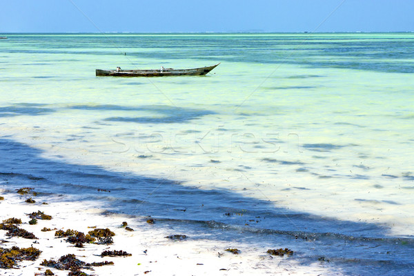 ストックフォト: ビーチ · 海藻 · 海 · タンザニア · インド · 砂