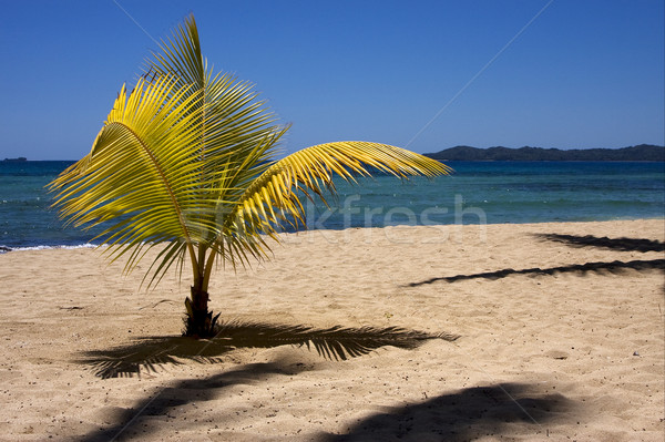 palm  and coastline Stock photo © lkpro