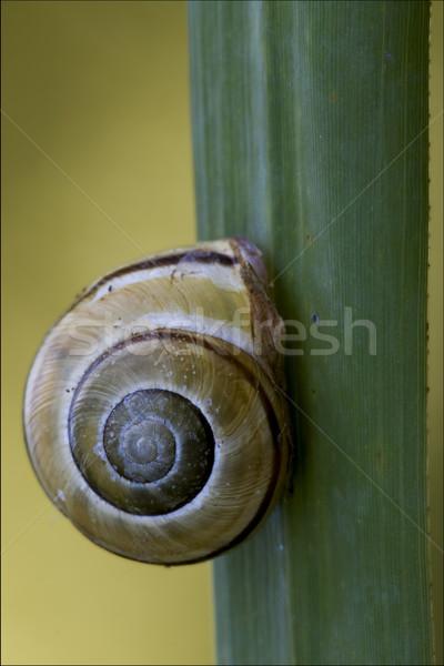 Oldal vad barna csiga zöld levél bokor Stock fotó © lkpro
