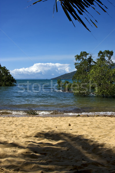 rock stone branch boat palm lagoon and coastline Stock photo © lkpro