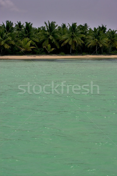 coastline and tree in  dominicana Stock photo © lkpro
